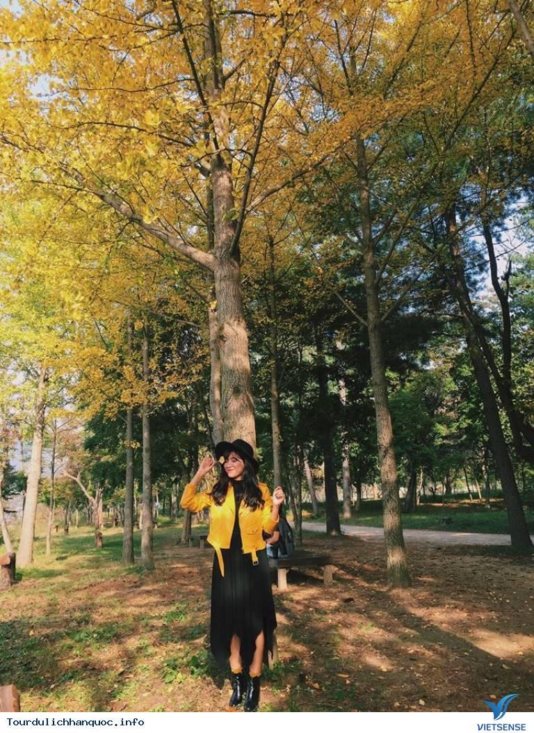 Thời Tiết Hàn Quốc Tháng 11 - Ảnh 1
