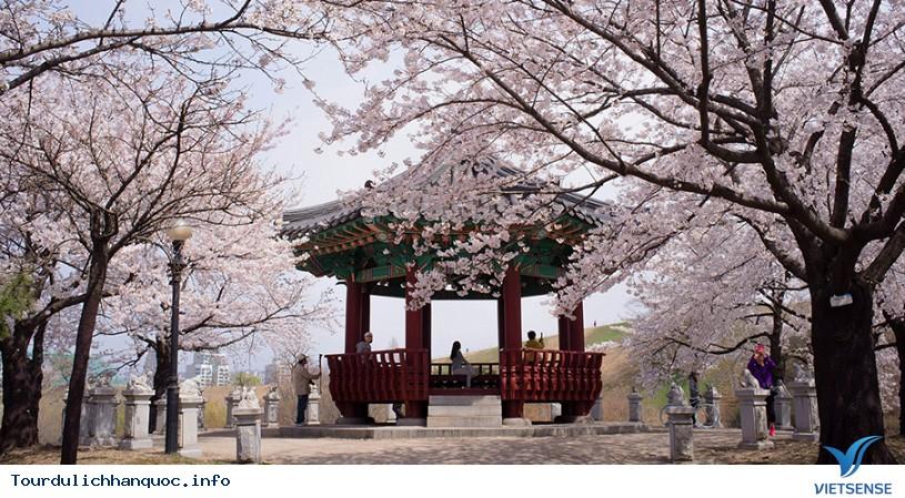 20 địa điểm ngắm hoa anh đào đẹp ở Hàn Quốc - Ảnh 4
