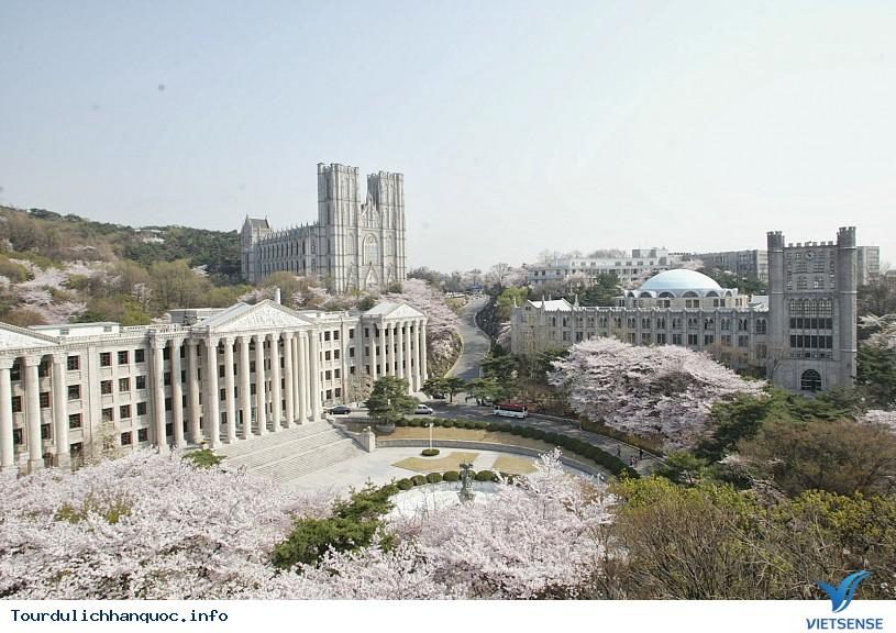 20 địa điểm ngắm hoa anh đào đẹp ở Hàn Quốc - Ảnh 8