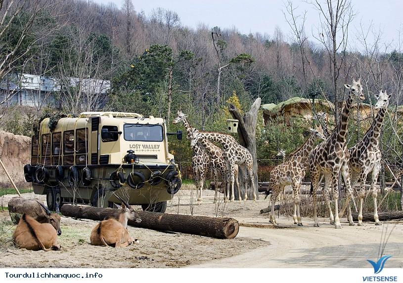 Công viên Everland - Hàn Quốc cho bạn trải nghiệm vòng quanh thế giới - Ảnh 4
