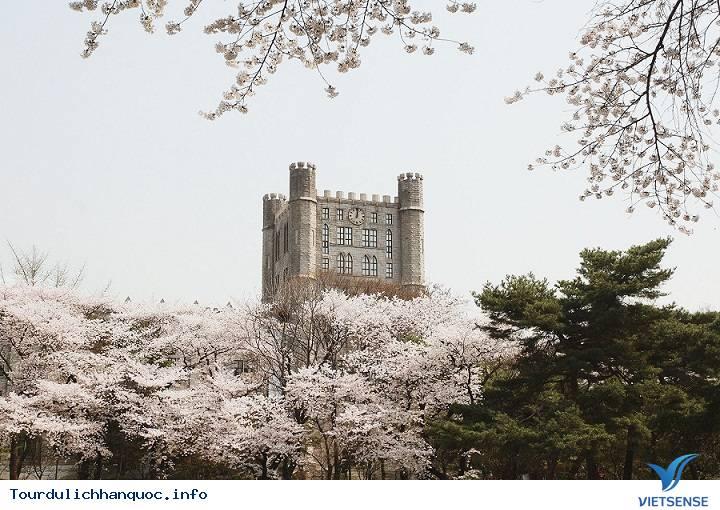20 địa điểm ngắm hoa anh đào đẹp ở Hàn Quốc - Ảnh 6