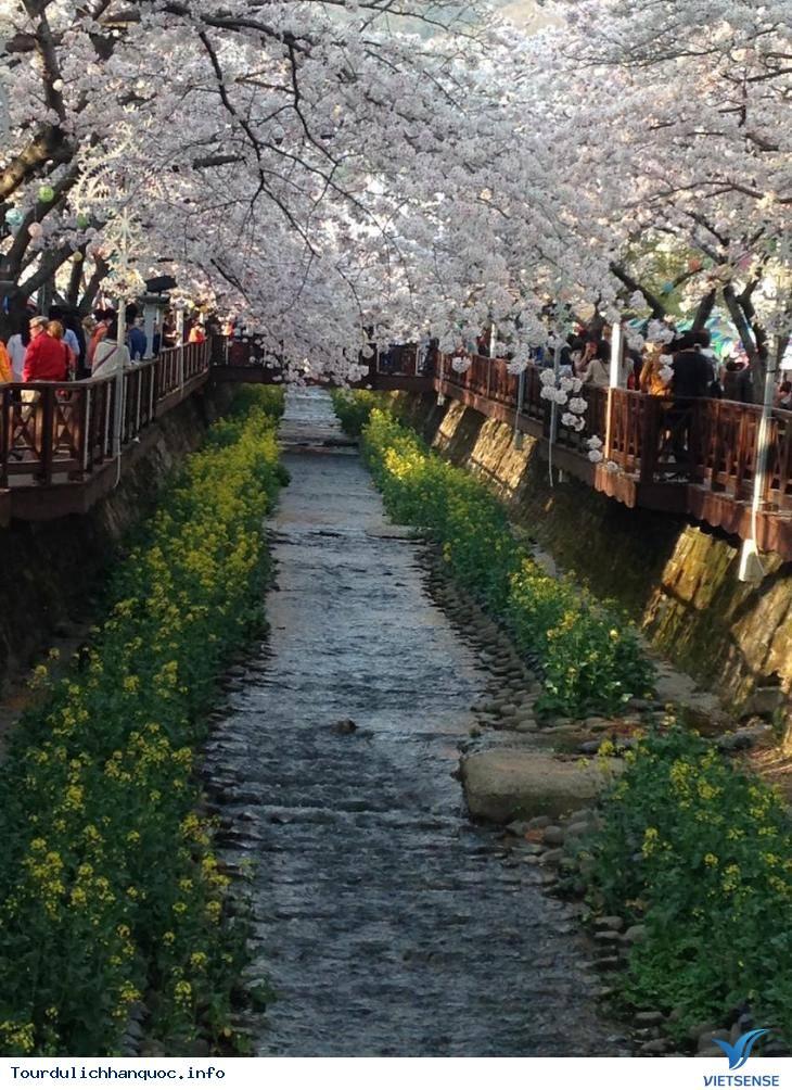 20 địa điểm ngắm hoa anh đào đẹp ở Hàn Quốc - Ảnh 2