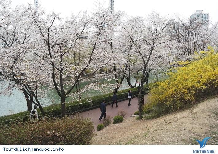 20 địa điểm ngắm hoa anh đào đẹp ở Hàn Quốc - Ảnh 3