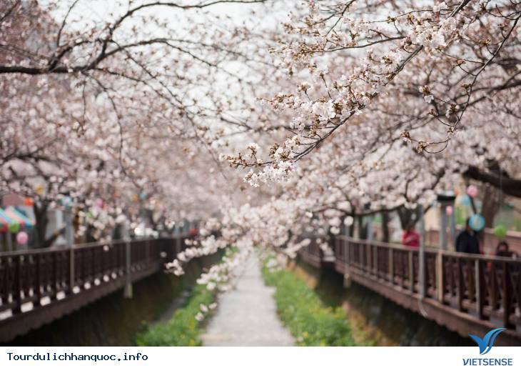 20 địa điểm ngắm hoa anh đào đẹp ở Hàn Quốc - Ảnh 1