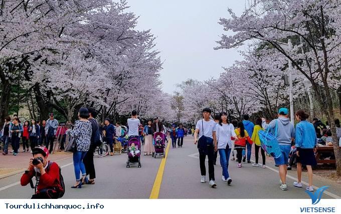 Cập Nhật Lịch Nở Hoa Anh Đào Ở Hàn Quốc 2018 - Ảnh 11