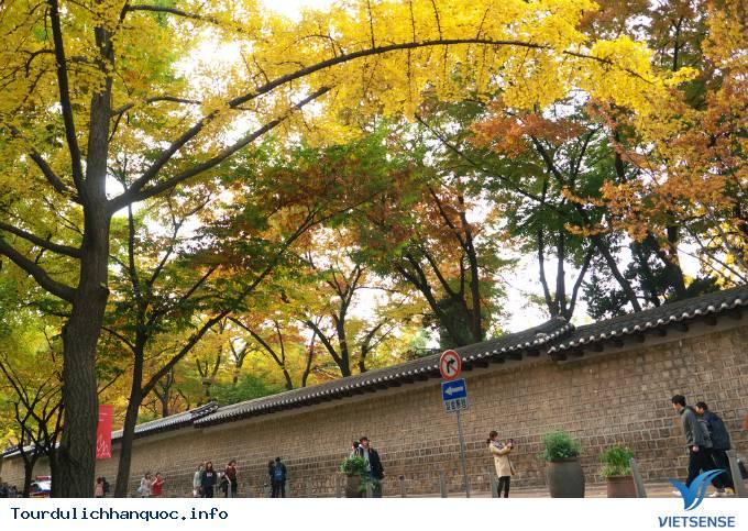 Con đường lãng mạn nhưng dính lời nguyền ở Hàn Quốc - Ảnh 1