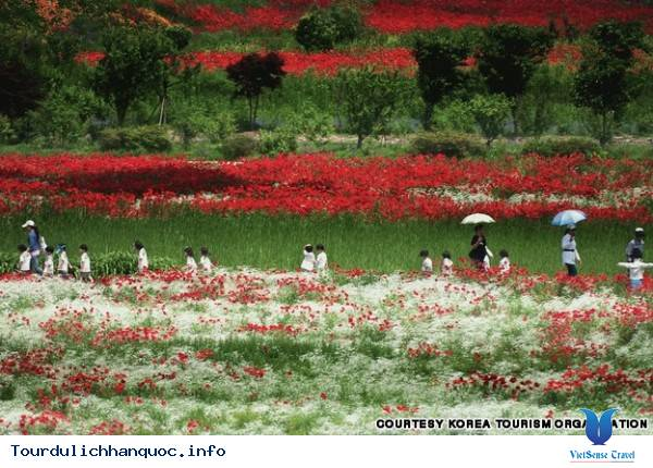 Địa điểm phải đến trong chuyến du lịch Hàn Quốc - Ảnh 33