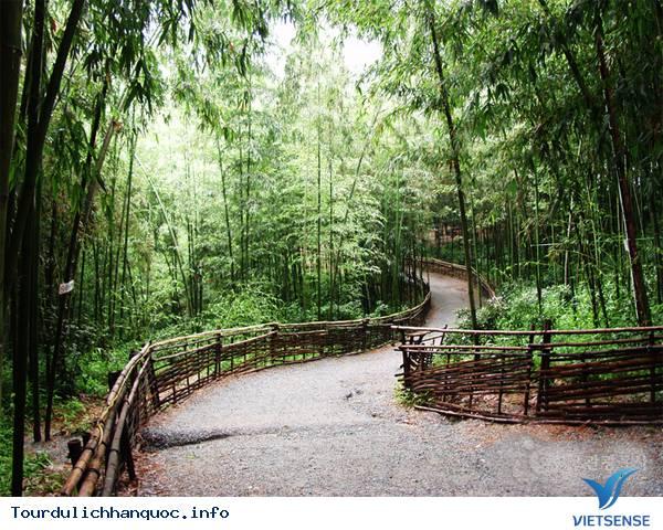 Du lịch Hàn Quốc - Chìm mình trong rừng truc xanh biếc ở xứ kim chi - Ảnh 2