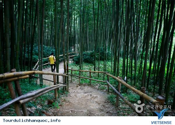 Du lịch Hàn Quốc - Chìm mình trong rừng truc xanh biếc ở xứ kim chi - Ảnh 5
