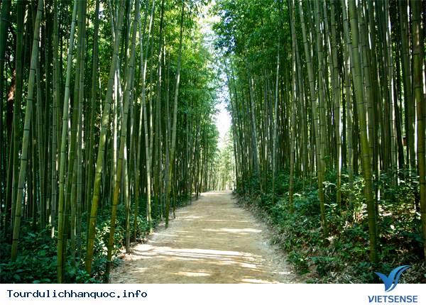 Du lịch Hàn Quốc - Chìm mình trong rừng truc xanh biếc ở xứ kim chi - Ảnh 1