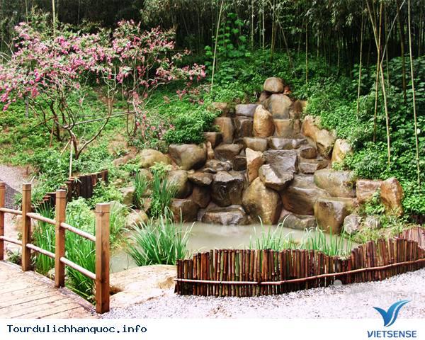 Du lịch Hàn Quốc - Chìm mình trong rừng truc xanh biếc ở xứ kim chi - Ảnh 4