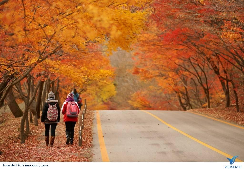 Du lịch hàn quốc 6 ngày 5 đêm mùa lá đỏ từ Hồ chí minh,du lich han quoc 6 ngay 5 dem mua la do tu ho chi minh