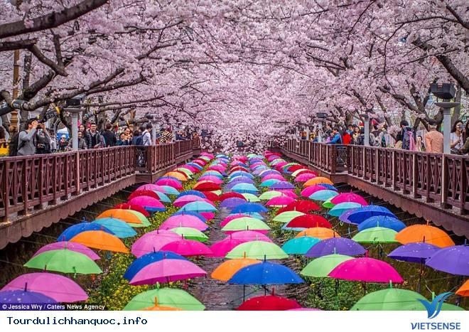 Du Lịch Nhật Bản và Hàn Quốc mùa hoa Anh Đào - Ảnh 1