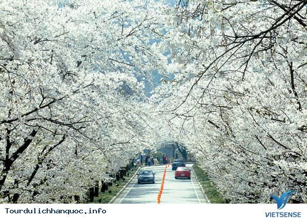 Du lịch vào mùa đông trên đất nước Hàn Quốc - Ảnh 3