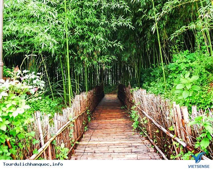 Ghé Thăm Damyang Với Hành Trình Du Lịch Sinh Thái - Ảnh 2