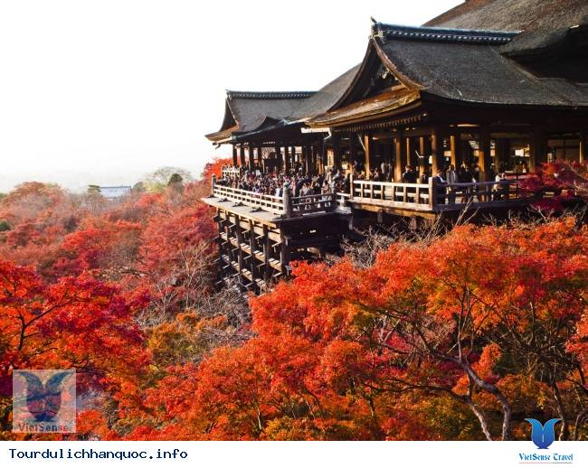 Hình ảnh đẹp mùa lá đỏ ở Hàn Quốc