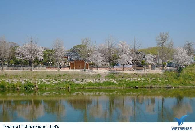 Hoa anh đào mãn khai ở cố đô Hàn Quốc - Ảnh 1