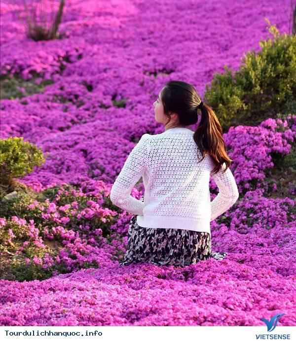 Hoa Đỗ Quyên nhuộm một màu tím mộng mơ các triền đồi ở Hàn Quốc - Ảnh 10