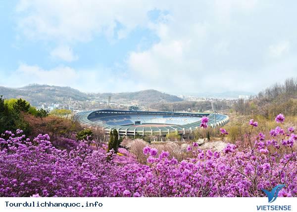 Hoa Đỗ Quyên nhuộm một màu tím mộng mơ các triền đồi ở Hàn Quốc - Ảnh 7