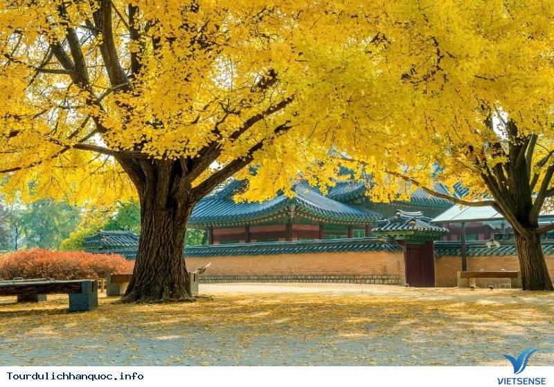 Hòa Mình Vào Những Trải Nghiệm Tuyệt Vời Với Mùa Thu Hàn Quốc - Ảnh 2