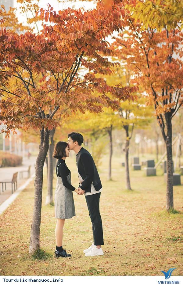 Ít nhất phải một lần đón mùa thu ở Hàn Quốc trong đời - Ảnh 2