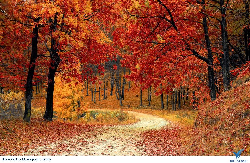 Ít nhất phải một lần đón mùa thu ở Hàn Quốc trong đời - Ảnh 1