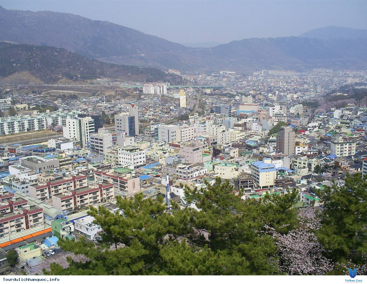 Jinhae-gu: Một mảnh trời hoa đào của xứ sở Hàn Quốc - Ảnh 1