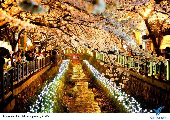 Jinhae-gu: Một mảnh trời hoa đào của xứ sở Hàn Quốc - Ảnh 4
