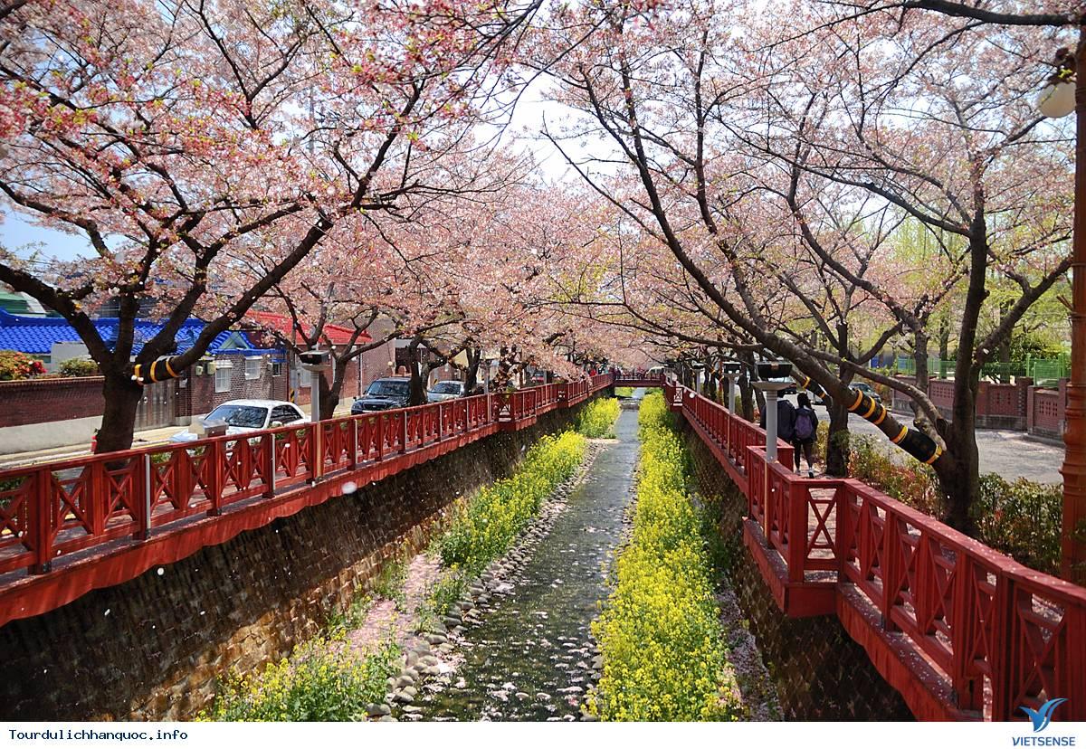 Jinhae-gu: Một mảnh trời hoa đào của xứ sở Hàn Quốc - Ảnh 2