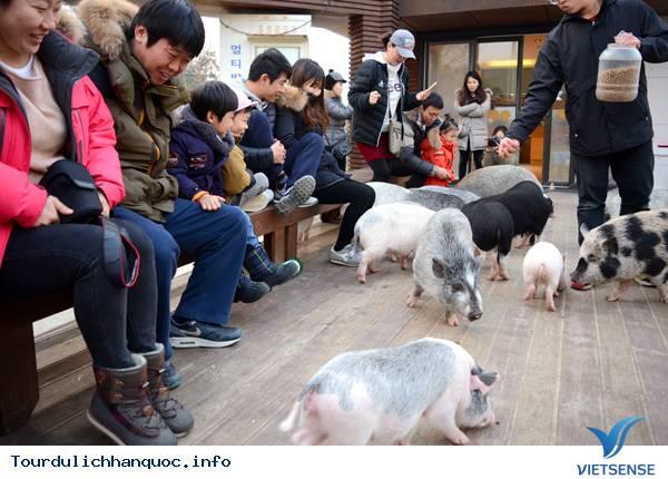 Khám Phá Những Bảo Tàng Độc Đáo Ở Hàn Quốc - Ảnh 2