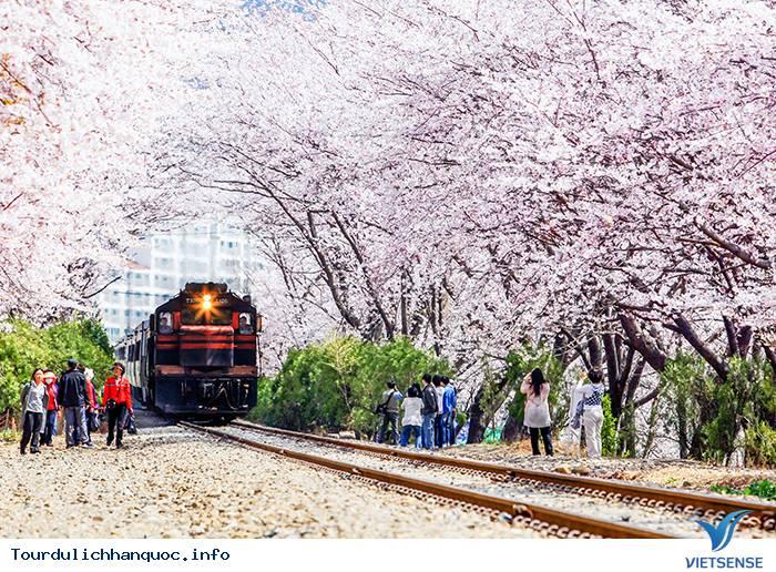 Lãng mạn trong Lễ hội Gunhangje Jinhae ở xứ sở Hàn Quốc - Ảnh 1