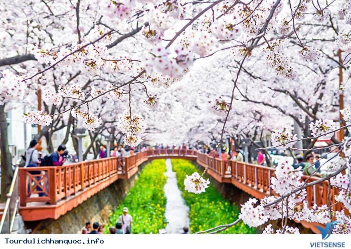 Lãng mạn trong Lễ hội Gunhangje Jinhae ở xứ sở Hàn Quốc - Ảnh 3