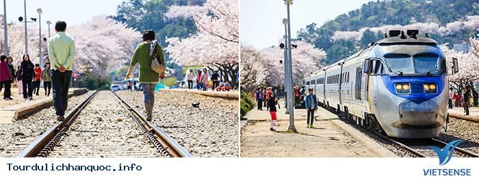 Lãng mạn trong Lễ hội Gunhangje Jinhae ở xứ sở Hàn Quốc - Ảnh 6