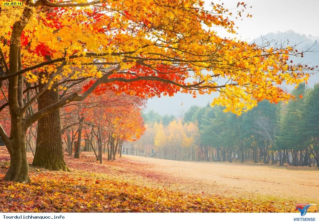 Mùa thu ngập tràn trên địa đàng thần tiên nhất Hàn Quốc - Ảnh 3