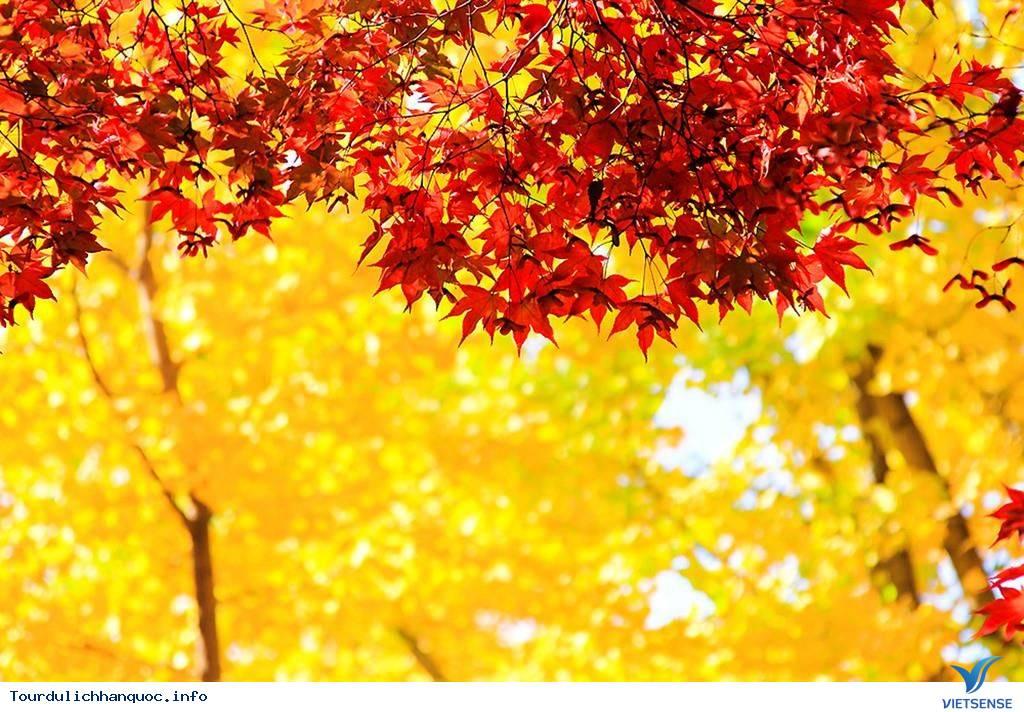 Mùa thu ngập tràn trên địa đàng thần tiên nhất Hàn Quốc - Ảnh 5