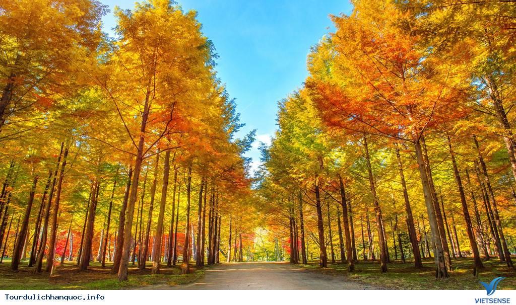 Mùa thu ngập tràn trên địa đàng thần tiên nhất Hàn Quốc - Ảnh 2