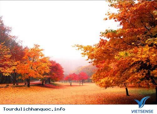 Nên đi du lịch Hàn Quốc vào mùa nào trong năm - Vietsense - Ảnh 3