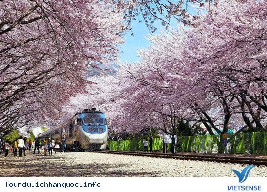 Nên đi du lịch Hàn Quốc vào mùa nào trong năm - Vietsense - Ảnh 1