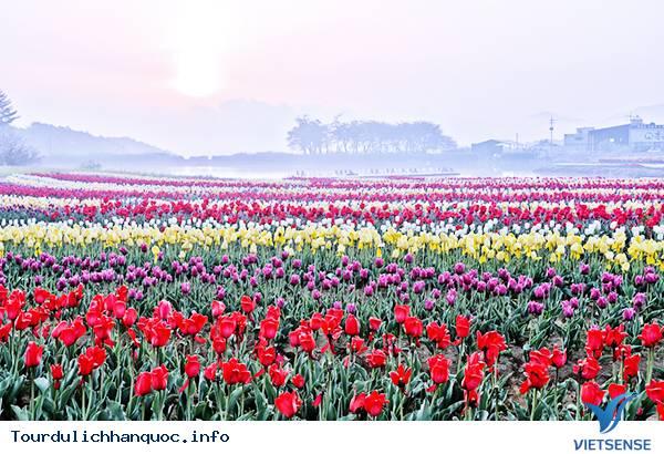 Ngắm nhìn những mùa hoa tươi sắc tại Hàn Quốc - Ảnh 4