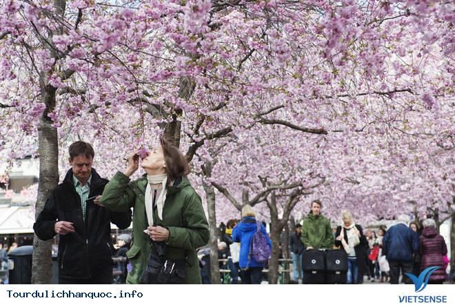 Ngắm nhìn những mùa hoa tươi sắc tại Hàn Quốc - Ảnh 1