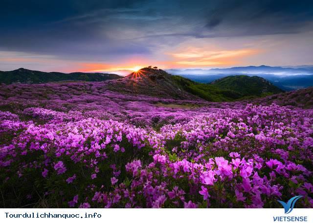 Ngắm nhìn những mùa hoa tươi sắc tại Hàn Quốc - Ảnh 6