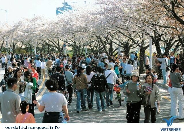 Ngắm nhìn những mùa hoa tươi sắc tại Hàn Quốc - Ảnh 3