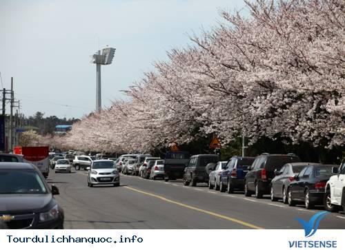 Những Lễ Hội Đặc Sắc Của Đất Nước Hàn Quốc - Ảnh 7