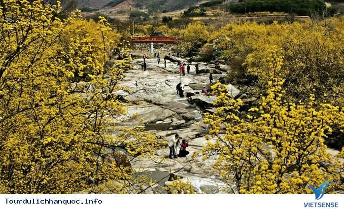 Những Lễ Hội Mùa Xuân Hấp Dẫn Ở Hàn Quốc 2015 - Ảnh 2