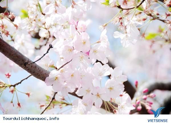 Những Lễ Hội Mùa Xuân Hấp Dẫn Ở Hàn Quốc 2015 - Ảnh 4