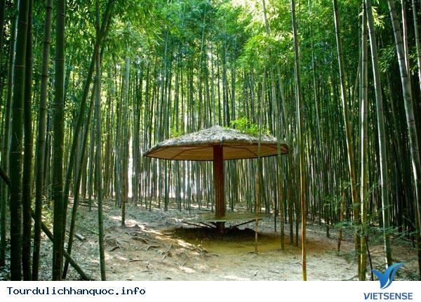 Rừng Tre Juknokwon - Ảnh 2
