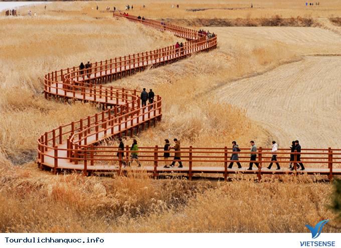 Thăm cánh đồng lau đẹp mê mẩn ở Hàn Quốc - Ảnh 2
