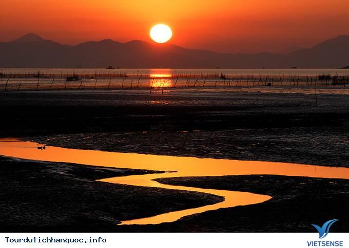 Thăm cánh đồng lau đẹp mê mẩn ở Hàn Quốc - Ảnh 4