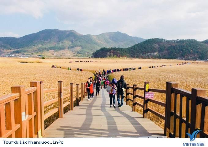 Thăm cánh đồng lau đẹp mê mẩn ở Hàn Quốc - Ảnh 1