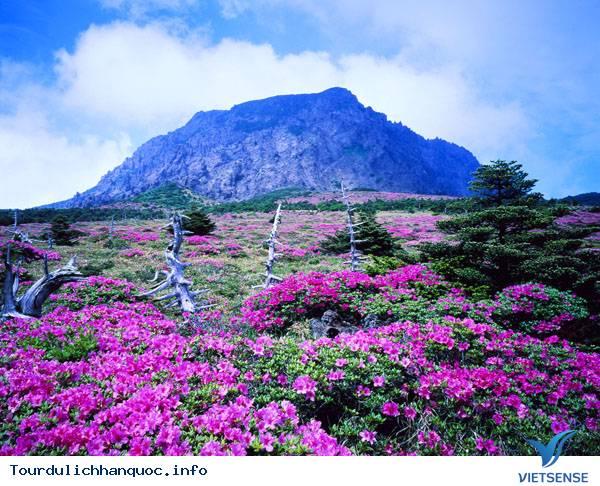 Tổng quan về đảo Jeju, Đảo tình yêu Hàn Quốc - Ảnh 2